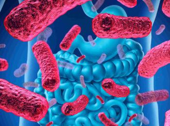 Tutti parlano di microbiota: ma cos'è?