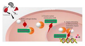 Enzalutamide - Meccanismo d'azione