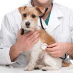 veterinario-IL TUO FARMACISTA