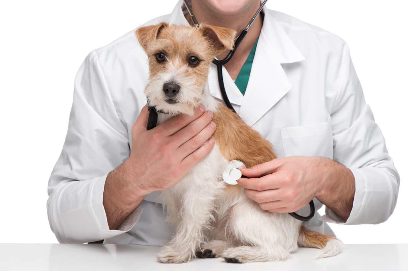 Ricetta Veterinaria Uso In Deroga.Ricetta Veterinaria Chiarimenti E Novita Della Normativa Il Tuo Farmacista