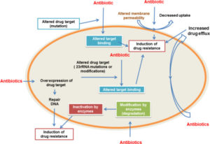 Mutational drug resistance