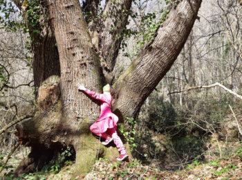 La silvoterapia ed il tree hugging