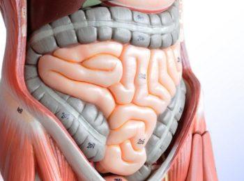 cibo & Salute: come assorbe il cibo l'intestino?