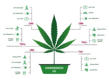 Cannabinoidi: cosa sono?