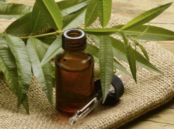 TEA TREE OIL: ANTICHI E ODIERNI USI